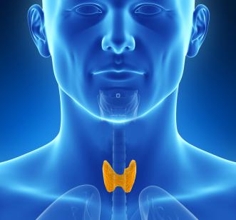 tiroide-ou-tireoide